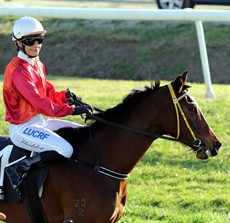 Murwillumbah Cup winner Anne Bonny has been racing in career best form winning her last three starts. Belinda Hodder has been aboard in all three outings. She will be looking to add the Ballina Cup to her list of successes