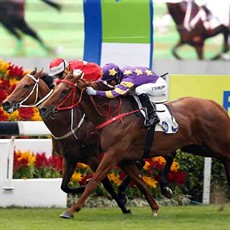 Western Express (purple) just gets up to defeat Wah May Friend to win the Panasonic Cup under Joao Moreira.
