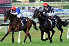 Emphasis and Rudy fight it out last start at Doomben. They meet again on Saturday. (see race 5)