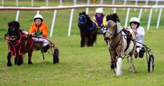 Mini trots