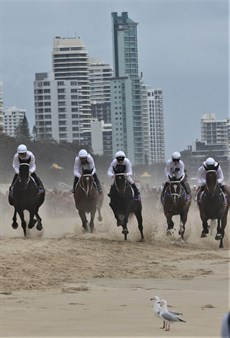 The beach gallops are always a great spectacle … even if some seagulls weren't certain where to watch it from